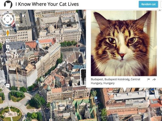I know where cats live